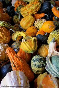 Ornamental Gourds Halloween Folk Art by Melissa Valeriote