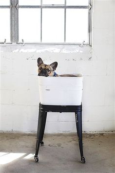 Umm who looks so cute in this Wash Tub on Stand from @rdor-rentals