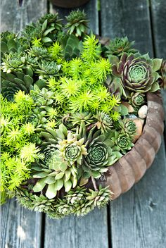 Bowls of succulents as centerpieces