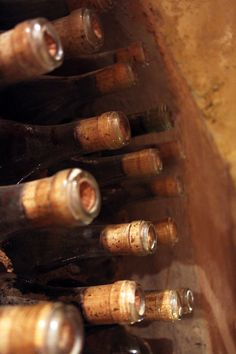 Wine cellar from South America