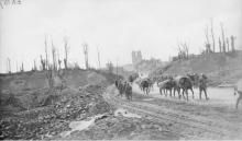 A group of German prisoners, taken by Australian troops, making their way towards the Menin Gate, following the capture of many German troops during the attack launched that morning. Soldiers, leading a line of packhorses, are seen heading in the opposite direction towards the front line. The ruins of Ypres can be seen in the background. Note the light railway line along the side of the road, which was used for transporting troops and supplies.