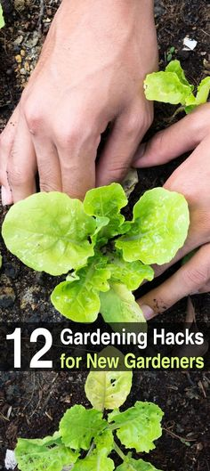 If you're new to gardening, you'll be glad to hear that there are many tips that can help make the process cheaper, easier, and more efficient.