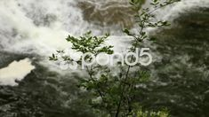 Pan From Plant to Waterfall Cascading Over Ledge, Lush Forest Waterfalls - Stock Footage Forest Waterfall, Forest Landscape, Photo Illustration, Waterfalls, State Parks, Stock Footage, Lush, Photoshop, Nature