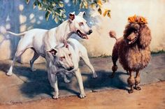 Bull Terriers and a Poodle by Christopher Gifford Ambler (1886-1965)