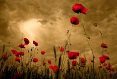 Deeper Story :: Lest We Forget, Remembrance Day. We will remember them #remember #remembrance