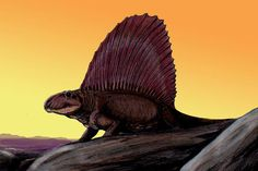 Often mistaken for a true dinosaur, Dimetrodon was actually a sail-backed reptile that lived tens of millions of years before the first dinosaurs had evolved. Here are 10 fascinating facts about this Permian pelycosaur.