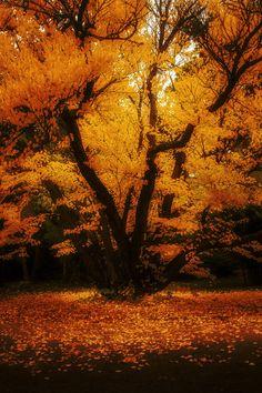 Autumn fire by Mirza Buljusmic on 500px.com