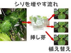 Wondering How Bonsai Trees Are Made? Green Garden, Garden Plants, Farm Gardens, Outdoor Gardens, Miniature Trees, Foliage Plants, Edible Garden, Gardening For Beginners, Green Flowers