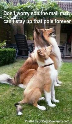 dog gone funny - Google Search