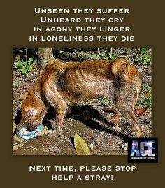 """""""Unseen they suffer. Unheard they cry.In agony they linger. In loneliness they die. Next time, please stop. Help A Stray!"""""""