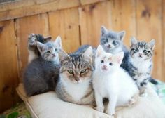 Гордые мамочки очаровательных котят