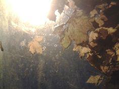 Foliage Feuillage Fogliame