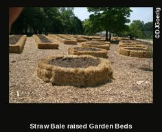 Straw Hay bales are the best way to make a raised bed on the cheap!