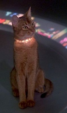 """Jake, """"The Cat from Outer Space"""" by Walt Disney Productions, 1978."""