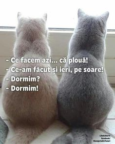 Haha Funny, Funny Cats, Funny Animals, Super Funny, Really Funny, R Words, Funny Times, Just Smile, Cute Wallpapers
