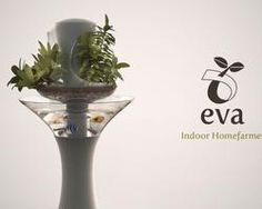 EVA indoor homefarming, with fish! What's not to love?