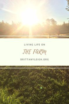 A dive into life in 2019 living on a hobby farm. Find out if it's the lifestyle for you! Hobby Farms, In 2019, Farm Life, Fun Facts, Lifestyle, Places, Funny Facts, Lugares