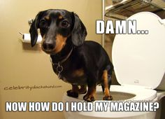 When you need all 4 legs to sit.. #dachshund