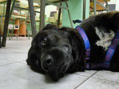 Antonio es un hombre de 58 años que ha sufrido un ictus, con problemas de lenguaje, ciertas limitaciones motoras, y los cambios caracteriológicos propios del síndrome. Actualmente sigue un programa de rehabilitación en el cual se le recomienda la posibilidad de tener un perro de asistencia.   #2013 #Proyectos #TAAC Animals, Attendance, Dogs, Men, Blue Prints, Animales, Animaux, Animal, Animais