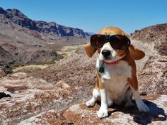 After 2 years living full time in the Fifth Wheel Trailer and countless short trips in our camper van we have learned a few things about RVing with dogs.                                                                                                                                                                                 More