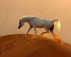 .Beautiful Arabian