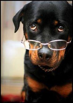 #Rottweiler's photo.