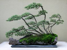 The bonsai rock planter has become a part of the piece with moss unifying it.