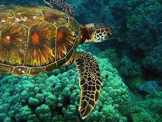 Sea turtles are so fun...