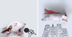 Just like Javier Perez, Victor Nunes and Dudi Ben Simon, Brazilian illustrator Rafael Mantesso creates simple but brilliant illustrations that make use of real-life objects to give themselves meaning. Unlike these artists, however, Mantesso enlists the help of a special collaborator – his beautiful bull terrier, Jimmy Choo.