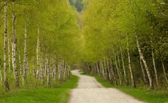 19 best os mensageiros images on pinterest 50 fashion angels and path through thick birch forest hd wallpaper fandeluxe Choice Image