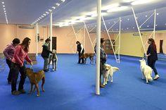Multicentrum DOG Academy, kurz handlingu, www. Luxury Dog Kennels, Pet Hotel, Vip, Pets, Hotels, Animals, Animals And Pets, Animales, Animaux