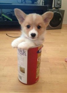 """23 Reasons Why """"If It Fits, I Sits"""" Photos Are the Best Thing on the Internet"""
