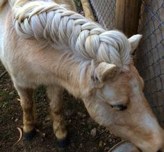 """The History Behind The Popular Trend Of Horse Mane Braiding    The idea behind horse hair braiding actually originates from the mythical practice of """"elf knots."""" According to ancient folklore, fairies would visit stables in the middle of the night and tie knots in a horse's mane."""