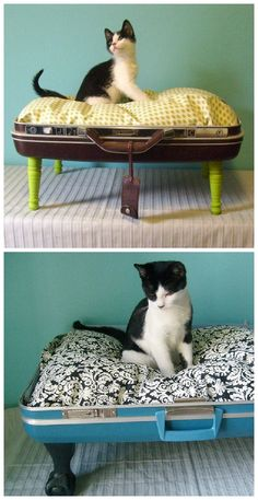 "Vintage suitcase are transformed by ""Vintage Renaissance"" into a wonderful beds…"