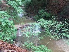 Lust auf Natur? Wie wärs mit der Hagenbachklamm … Hagen, Aquarium, Plants, Road Trip Destinations, Hiking, Vacation, Nature, Goldfish Bowl, Aquarium Fish Tank
