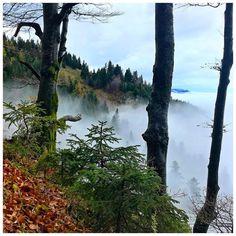 Über den Wolken ... 🎶☁️🍁 . #abovetheclouds #clouds #autumn #autumnvibes #goplayoutside #trailrunning #mountains #esgibtkeinschlechteswetter #salzkammergut #austria #aktivindenalpen #loves_austria #mountainlove #upperaustria #forest #trees #mystic Mountain Love, Side, Above The Clouds, Layout, Instagram, Water, Outdoor, Mountains, Clouds
