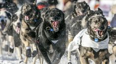 It's 2015—time to pack up the Iditarod