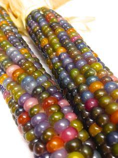 Glass Gem corn....Harvest Outdoor Decor - Sow & Dipity