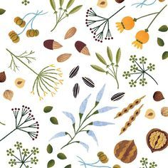 More seeds and nuts! #seeds #nuts #illo #illustration