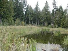 Wetlands outdoor learning classroom