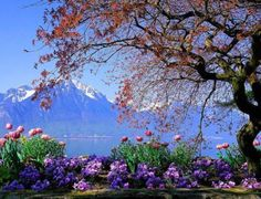 Lake-Geneva-Switzerland