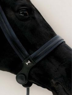 Hermes halter, for the dignified equine in your life. All The Pretty Horses, Beautiful Horses, Animals Beautiful, Beautiful Beautiful, Horse Gear, Horse Tack, Black Horses, Wild Horses, Especie Animal