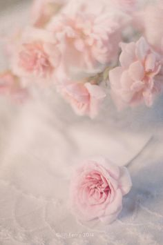 SOFT AND DREAMY --Soft pink roses   by Jill Ferry 2014 on Flickr