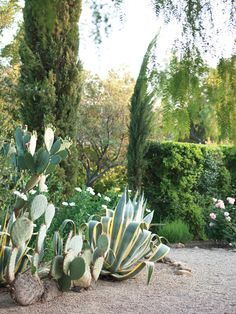 The one-acre property's mix of succulents and sculptural plants.