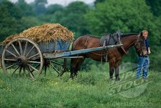 Cart and horse and the cart full on poop . Country Farm, Country Living, Horse Cart, English Farmhouse, Cowboy Horse, Farm Cottage, Country Lifestyle, Goat Farming, Farms Living