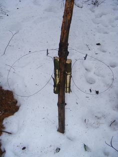 Beaver - snaring/ under ice and edu...bv | Water Trapping Archive | Trapperman.com Forums