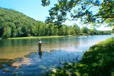 Taneycomo is a world class destination for fly fishing.