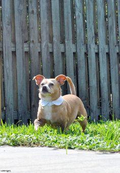 Share a little Funshine and make an adorable DIY designer dog shirt collar in minutes! #ShareFunshine ad