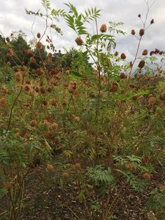 Camilla Hiley - Garden and Landscape Designer - Salisbury, Wiltshire UK Garden Plants, Perennials, Landscape Design, Grasses, Garden Ideas, Flowers, Autumn, Lawn, Fall