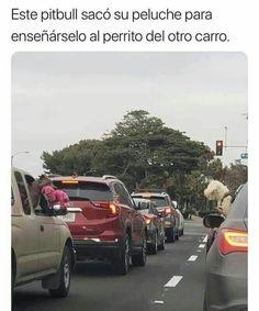 Funny Spanish Memes, Spanish Humor, Funny Car Memes, Bts Memes, Funny Cars, Memes Lindos, Cute Funny Animals, Pretty Animals, Animal Memes
